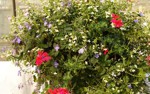 balkonplanten weinig onderhoud