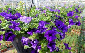 bloembakken voor balkon